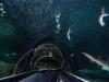Дело в том, что знаменитый Аквариум устроен таким образом, что проходит прямо по дну океана в виде прозрачного тоннеля на много десятков метров вперед. Где, как не здесь, можно реально ощутить тонны воды над головой, увидеть пробивающееся через водную толщу солнце, ощутить себя частью огромного и загадочного мира?