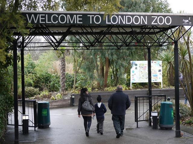 Открыли его весной 1828 года. Сегодня в его стенах держат более семисот разнообразных животных, что позволяет назвать Лондонский зоопарк самым крупным в стране.