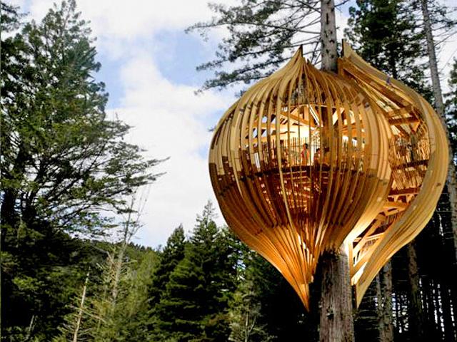 . Архитектурно-строительная компания Pacific Environments Architects Ltd. выстроила невероятный ресторан прямо на дереве – на огромной секвойе,  высотой около сорока метров.