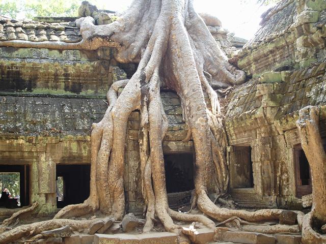 Так в джунглях скрылся некогда посещаемый храм, и теперь его практически незаметно издалека. И все же, Та Пром остается живописнейшим и загадочным местом.