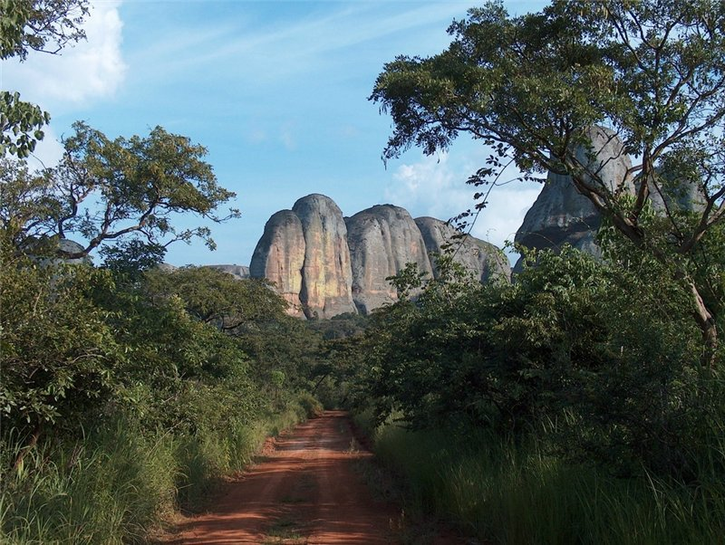 Растительный мир Анголы достаточно богат и разнообразен, почти на 40% состоит из тропических лесов (читола, сандаловое дерево, либма и т.д.). Пальмы украшают морское Ангольское побережье. На севере, востоке, юге и в центральных областях располагаются саванны (акации, баобабы и т.д.). Мангровые леса встречаются в северной части провинции Кабинды.