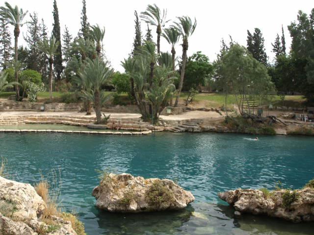 В Израиле более 40 национальных парков и 160 заповедников, насчитывающих около 2600 видов растений. 70 % современных лесов, в которых преобладают эвкалипты, сосны и акации, были посажены руками человека.