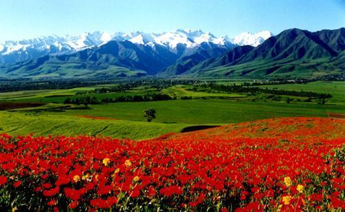 Горы занимают большую часть территории Киргизии. Они делят страну на две части - южную и северную. Только высокогорная автомобильная трасса Бишкек — Ош служит соединительным звеном между этими регионами.