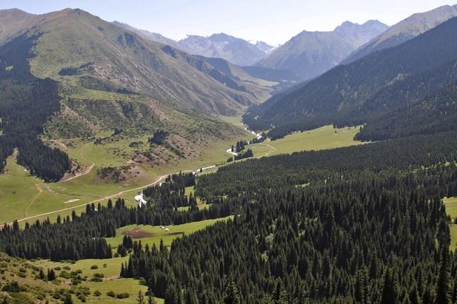 Еловые леса, заросли арчи и субальпийские луга характерны для Тянь-Шаня. Орехоплодные леса сохранились на территории Ферганской долины.