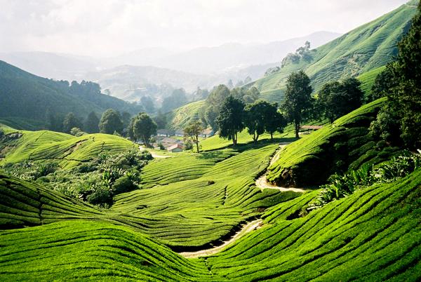 Невысокие горы и холмы занимают большую часть территории Полуостровной Малайзии. Почти через всю страну тянется хребет Кербау.