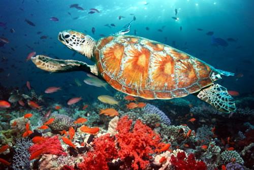Почти 240 видов млекопитающих населяют леса Малайзии. Орнитофауна очень разнообразна. Множество пресмыкающихся и насекомых. Прибрежные воды изобилуют рыбой и моллюсками.