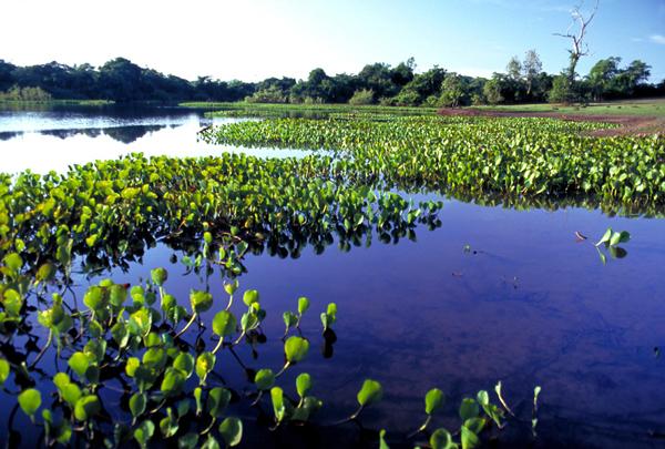 В долинах рек на территории Парагвая преобладают саванны, в которых произрастают в большом количестве злаки и группы пальм, а также густые вечнозеленые леса. На западном берегу Парагвая расположены более засушливые районы, где основу растительности составляют ксерофитные кустарники. Иногда, на некоторых участках, они сменяются пальмами. Здесь также можно встретить то самое знаменитое дерево, которое славится своей удивительно крепкой и устойчивой древесиной.