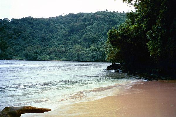 Для охраны растительности, животных и коралловых рифов в стране был специально создан Национальный парк. В Самоа произрастают: кокосовая пальма, хлебное дерево, бананы, папайя, ананасы и пр. Лов рыбы, в частности, тунца, осуществляется в промышленных масштабах. В стране широко развита индустрия туризма.