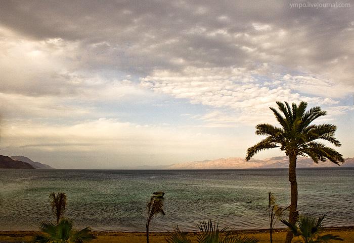 Очень бедна растительность Саудовской Аравии. Верблюжья колючка и белый саксаул произрастают в песках пустыни, астрагалы и полыни - на лавовых полях, акации и тополя – по руслам временных водотоков, тамариск – на засоленных почвах, галофитные кустарники – на побережье.