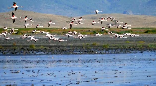 Фауна страны очень разнообразна: зебры, леопарды, львы, жирафы, антилопы и др. Крокодилы и гиппопотамы встречаются вдоль рек. Большое количество разнообразных птиц. Водятся змеи, в том числе и ядовитые.