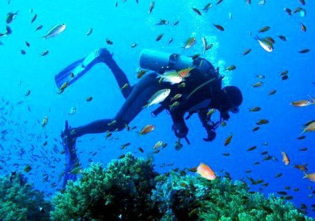 Подводный мир намного разнообразнее: крабы, черепахи, лангусты, изобилие рыбы. Чудесные пляжи на берегу океана привлекают в страну многочисленных туристов.