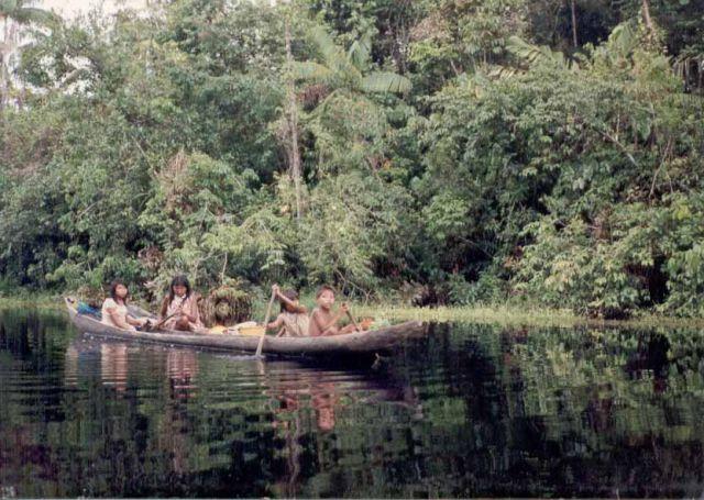 Почти половину земель страны занимают лесные покровы (в основном, тропические леса), в землях близ реки Ориноко много болот. Животный мир достаточно разнообразен, яркие представители - оцелот, муравьед, ленивец, обезьяны, броненосцы, ягуары, медведи и олени. Очень много птиц, такие, как цапли, фламинго, гуахаро, ибисы. Есть крокодилы, змеи (анаконды).